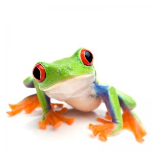frogcloseuponwhite
